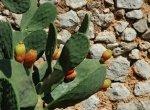 5 murettoAsecco-cactus